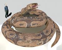 史上最大のヘビ、ティタノボア